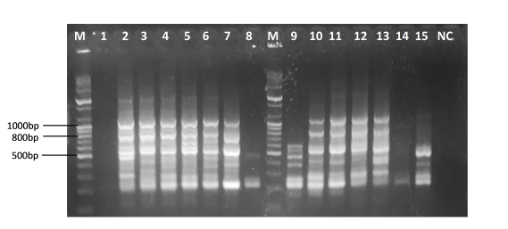 Genetic relatedness between human and animal Candida albicans isolates recovered from Southeastern Nigeria using random amplification of polymorphic DNA-PCR